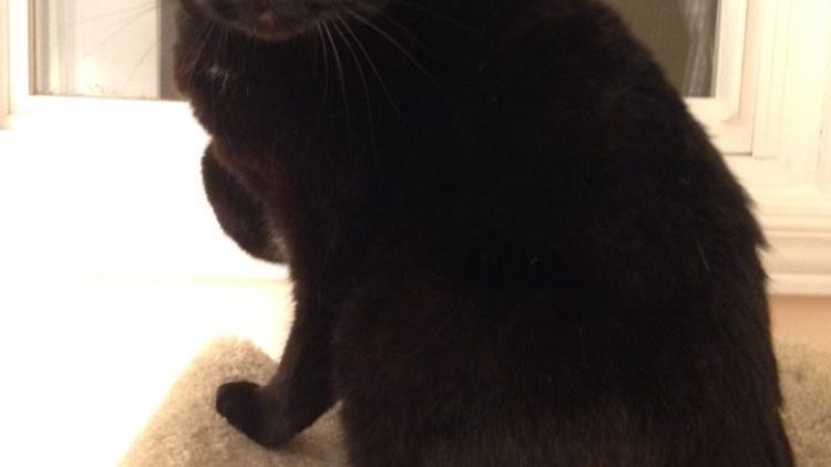 October Cat of the Month – Ebony